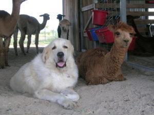 Hi! I'm Raime and I get along with everyone.